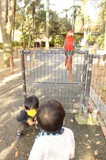 1130姫セン動物とり.jpg
